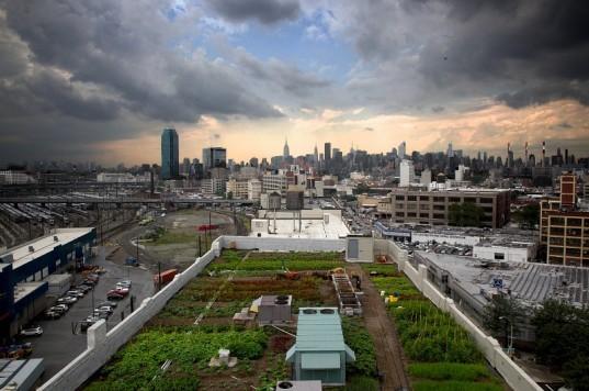 New Yorkban már a tetőn termesztik a növényeket