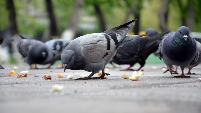 Elhiszed azt, hogy a galambok nálunk jobb befektetők?