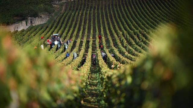 Megfejtették a borok drágulásának titkát