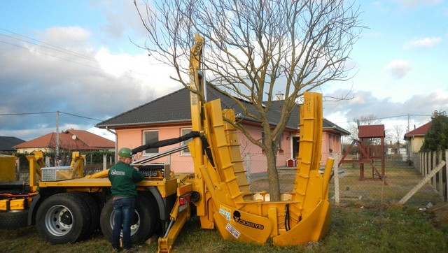 10 év helyett 2 óra: hamarabb lehet hatalmas fákkal teli a kert, mint gondolnánk