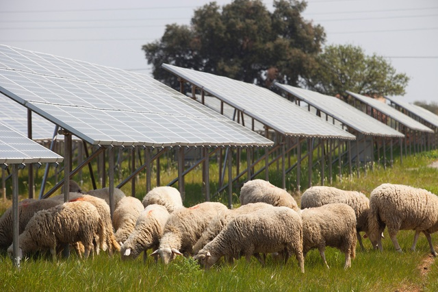 A napenergia lehelhet életet a haldokló magyar vidékbe