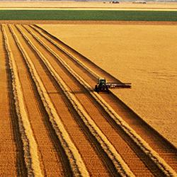 Portfolio Agrár Klub: Hogyan lehet ma gazdaságosan földet művelni Magyarországon?