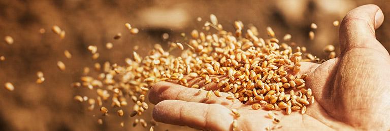 Portfolio Agrár Klub: Azonnali kihívások az agráriumban - A takarmányár-robbanás és ami mögötte van