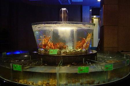 Élő homárok egy elegáns étteremben